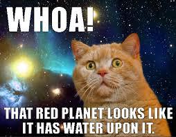 Funny Casino Memes - cat memes archives organized online slots organized online slots