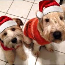 holiday foods that are safe for dogs keepdoggiesafe com u2013 keep