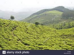 Rock Garden Darjeeling by Tea Garden India Stock Photos U0026 Tea Garden India Stock Images Alamy