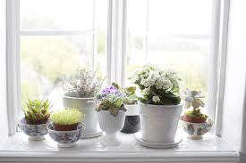 plants to purify the air in your home this fall