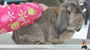 Rabbit Hutch For 4 Rabbits 4 Reasons To Have Rabbits On Your Homestead