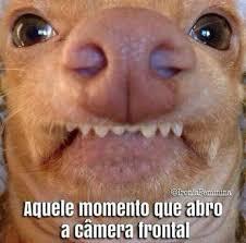 Tuna The Dog Meme - muito piadas e humor comunidade google humor pinterest