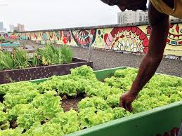 this rooftop garden is feeding atlanta u0027s homeless munchies