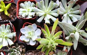 13 succulents that are native succulents and wine blog