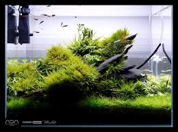 Planted Aquarium Aquascaping 536 Besten Aquaria U0026 Scapes Bilder Auf Pinterest Planted