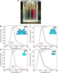 in vitro reconstitution of the cyanobacterial photoprotective