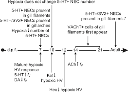 serotonergic and cholinergic elements of the hypoxic ventilatory
