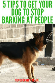 dog barks when we leave 5 great tips to get your dog to stop barking at people