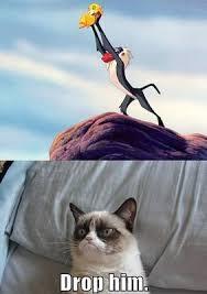 Grumpy Cat Meme No - grumpy cat meme no the best cat 2018