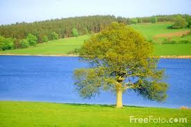 tree pictures free use image 15 19 15 by freefoto