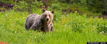 Animal Planet Documentary Grizzly Bears Full Documentaries - these are some of the sketchy ways nature documentaries are actually