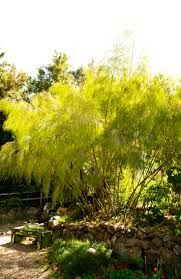 353 best ogrodowe trawy images on pinterest ornamental grasses