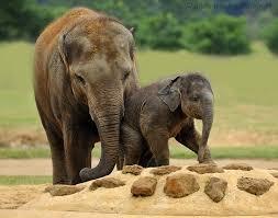 zoo cute baby elephant picture wallpapers elephants elephants hd