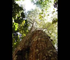 native plants in the amazon rainforest amazing amazonia amazon rainforest 46 pics