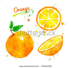 watercolor orange fruit stock images royalty free images