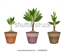 Tree Symbols How Plant Tree Easy Step By Stock Vector 365181785 Shutterstock