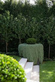 hedging plants budget wholesale nursery best 25 garden hedges ideas on pinterest hedges hedges