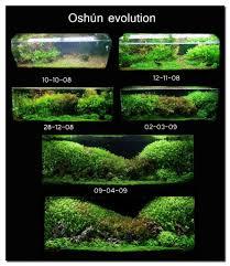 Aquascape Aquarium Designs Home Design Architecture Freshwater Aquarium Aquascaping Ideas