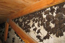 how much does it cost to remove bats from an attic