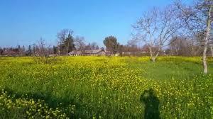 beautiful garden like flowers nice roadside view roadside