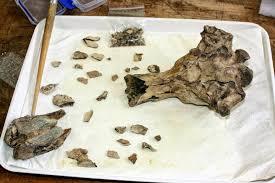 the coastal paleontologist atlantic edition reconstructing the