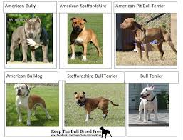 american pitbull terrier vs german shepherd til pit bulls were once known as