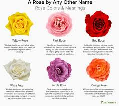 roses colors meaning what do flowers symbolize page 2 flowers ideas for