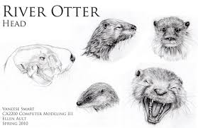 river otter head drawings ref by vinnie14 on deviantart