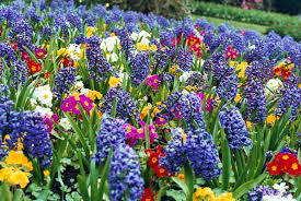 image of spring flowers spring flower pictures nice spring flower garden flower garden