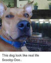 Sad Dog Meme - real life scooby doo dog meme meme rewards
