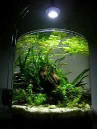 10 gallon planted tank led lighting shrimp jar aquarium google search aquascape pinterest