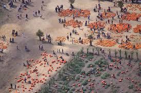 Pumpkins Galore Wright City Mo by Pumpkins Galore At Bates Nut Farm Dailyframe