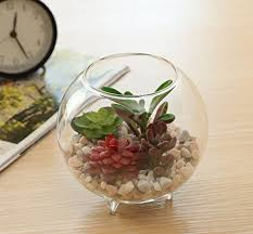 5 inch transparent mini tabletop glass globe plant terrarium with