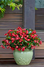 Patio Plants For Sun 55 Best Single Plants For Containers Images On Pinterest Proven