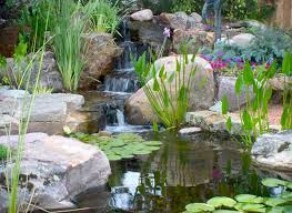 Backyard Pond Building Pond Construction Backyard Pond Design Examples Pacific Ponds