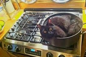 comment cuisiner cabelkawan comment bien cuisiner