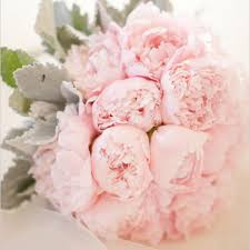 peonies flowers flower guide peonies bridalguide