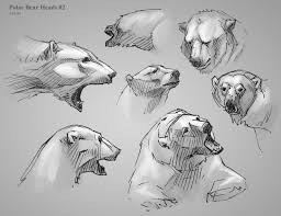 21 best draw polar bear images on pinterest animal sketches