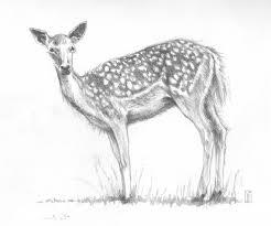 simple deer pencil sketch simple deer pencil sketch drawing art