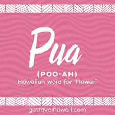 pua hawaiian word flower hawaiian words pinterest hawaii