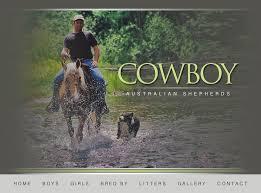 mdr1 australian shepherd cowboy australian shepherds u2022 scooter