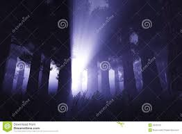 supernatural signs in night forest 3d render 1 stock image image