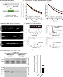 hsc70 chaperone activity is required for the cytosolic slow axonal