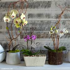 Orchid Plant Style An Orchid Plant Like A Pro Video Lia Griffith