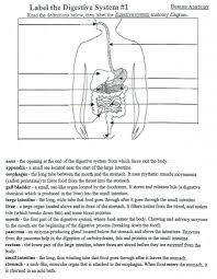 digestive system coloring page anatomy of the digestive system