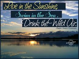Live In The Sunshine The Best Collection of Quotes