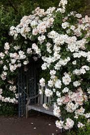 perennial plants garden ideas