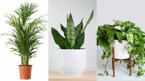 8 indoor plants that purify the air in your home youtube
