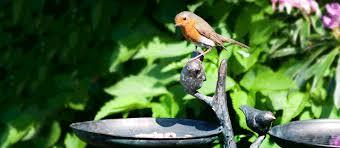 bird baths bird feeders black country metal works
