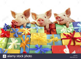piglets lying mountain gifts stock photo royalty